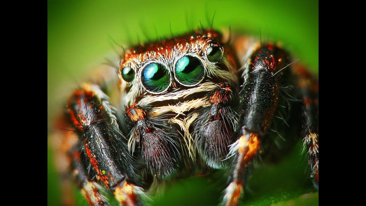 L' araignée la plus mignonne du monde.