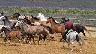 La ganaderia Domecq - Les chevaux et les cavaliers andalous - Andalousie - Espagne