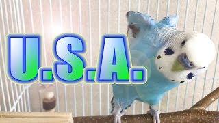 8/18 ご本家である『DA PUMP』のISSAさんが、ツイッターでこの動画を紹...