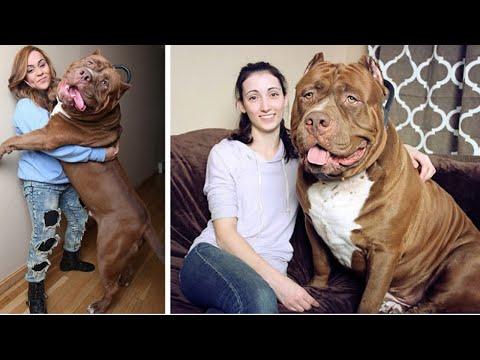 Top 10 GROOTSTE Honden ter Wereld!