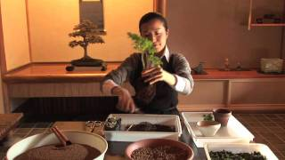 How to Make Your Own Bonsai #1 / 盆栽講座 山田香織 第1回