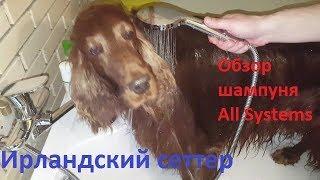 Ирландский сеттер. Обзор шампуня для собак All Systems Clearly illuminating.