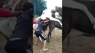 Horse Riding (horse Breeding)