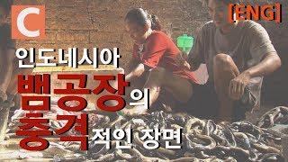 뱀 비린내가 가득 찬 뱀 공장_[ENG SUB] A snake factory full of snake-fishy smells thumbnail