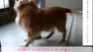 グッズやオヤツに頼らない本質の犬のしつけ【ホームページ】⇒ http://do...
