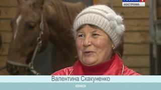 В сельскохозкомплексе «Башки» Костромской области выращивают лошадей породы хафлингер