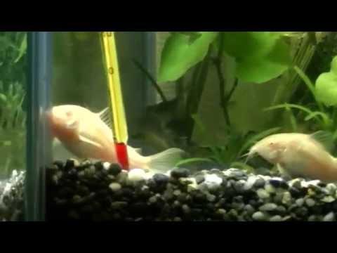 My pet tropical fish