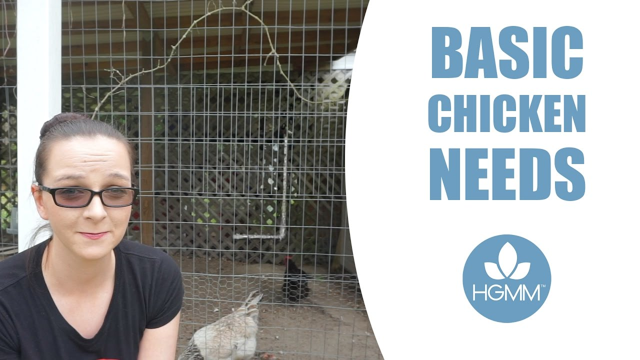 how to care for backyard chickens youtube