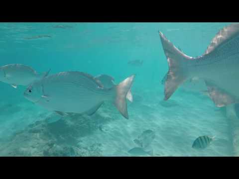 Snorkling Off El Cozumeleno Beach