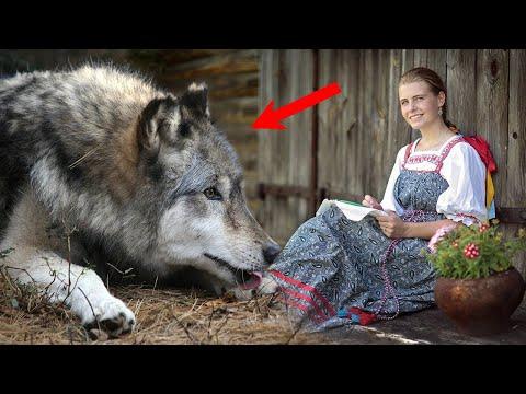 Девушка гладила живот беременной волчицы, моля о том, чтобы хоть кто-то пришел на помощь..