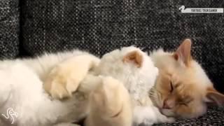 非常療癒的貓影片