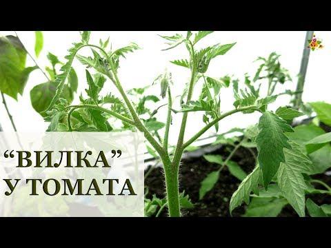 Вопрос: Почему на кисти томата только одна завязь?