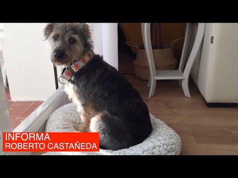 📹 I Maltratar un animal en Cantabria te puede costar 60.000 euros