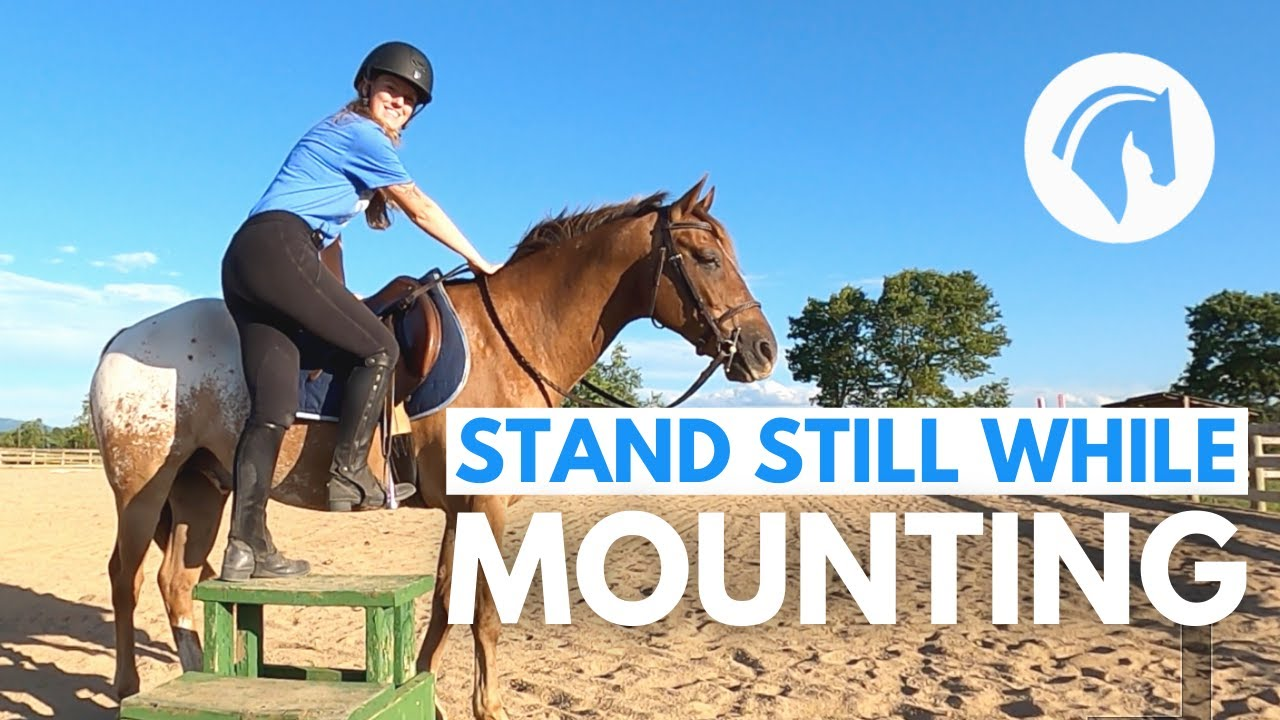 MAKE A HORSE STAND STILL AT THE MOUNTING BLOCK
