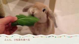 ふぇん、小松菜を食べる bunny Rabbit Eats Komatsuna.(mustard Spinach)