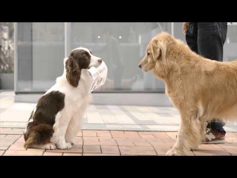 더블에이 - 'Lost Dog' 반려견 해피를 잃어버린 어느 회사원의 이야기