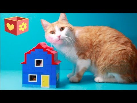 Simba and George | Cute cat | Building a Lego house | For children