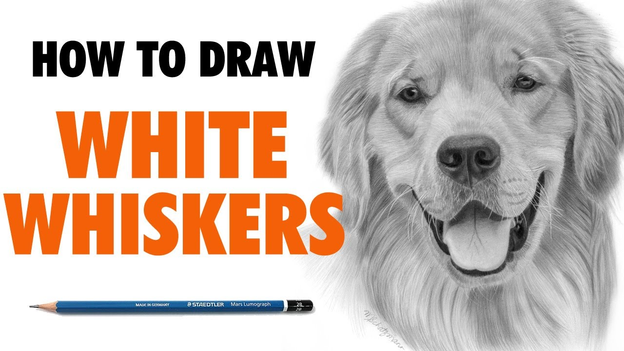 Uncategorized Golden Retriever Drawings how to draw white whiskers on a golden retriever youtube