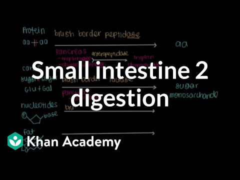 Small intestine 2: Digestion | Gastrointestinal system physiology | NCLEX-RN | Khan Academy