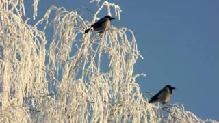 Белый снег -  Завируха