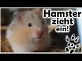 Der neue Hamster zieht ein!