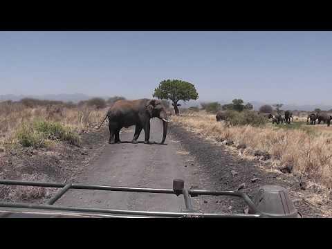 Safari in Meru Kenya October 2016 Part1