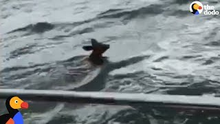 Boaters Head Out In Storm To Save A Drowning Fawn | The Dodo