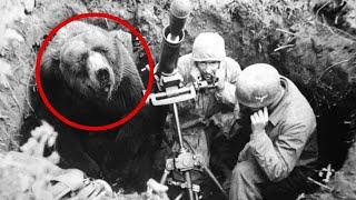 Душераздирающая история о медведе-солдате, который сражался во второй мировой…