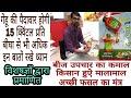 गेहूं की बुआई | बीज उपचार का कमाल, किसान होंगे मालामाल Rabi Crops me in Baatein ka dhyan jarur rakhe