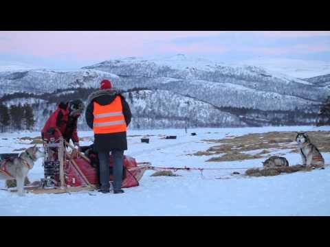 Malamute Quest on Finnmark sled dog race #5 - Skoganvarre checkpoint