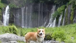 blog http://blogs.yahoo.co.jp/siro_wan/31638048.html Camera:Casio H...