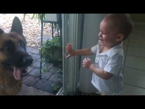 German Shepherds cause baby's uncontrollable laughter