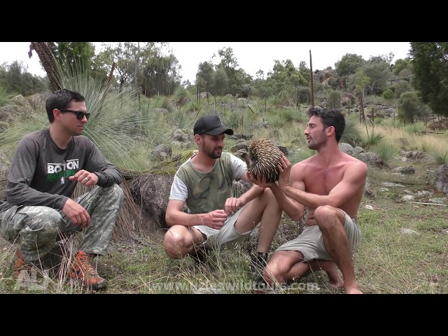 574,933 subscribers - Andrew Ucles's realtime YouTube