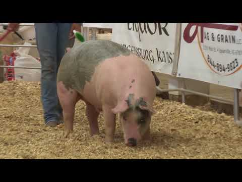 Kiowa County Livestock Auction 2018