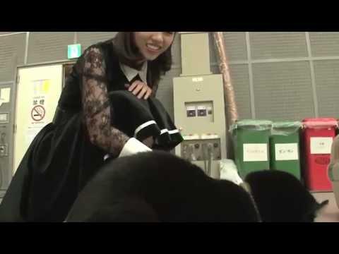 乃木坂46が猫と戯れる!