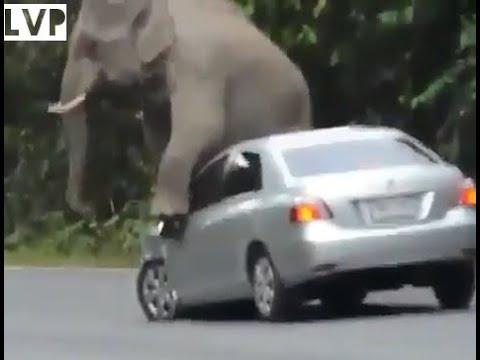 KAZIRANGA ELEPHANT ATTACK !!!