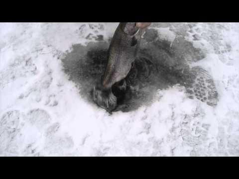 Ловля форели зимой на нимфу! ликбез