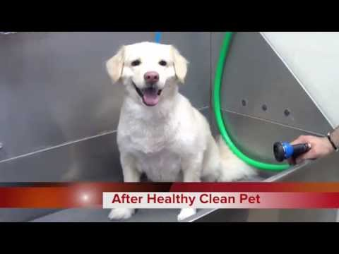 How To Wash A Dog Like A PRO By Healthy Clean Pet