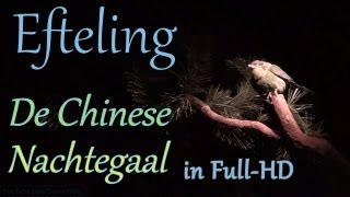 (Edited version) Efteling - De Chinese Nachtegaal HD (The Chinese Nightingale)