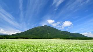 秋ソバの花が咲く黒姫高原・4K撮影