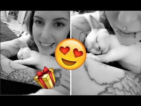 VLOG | Geburtsatagsvorbereitung & Katzenbaby Monty