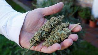 olyan emberek akik leszoktak a marihuána dohányzásáról)