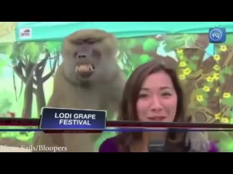 Funny live broadcast accidents - Canlı yayın kazaları