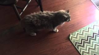 Коту исполнилось 20 лет ^.^ Соотношение возраста кошки и человека - это 100 лет.