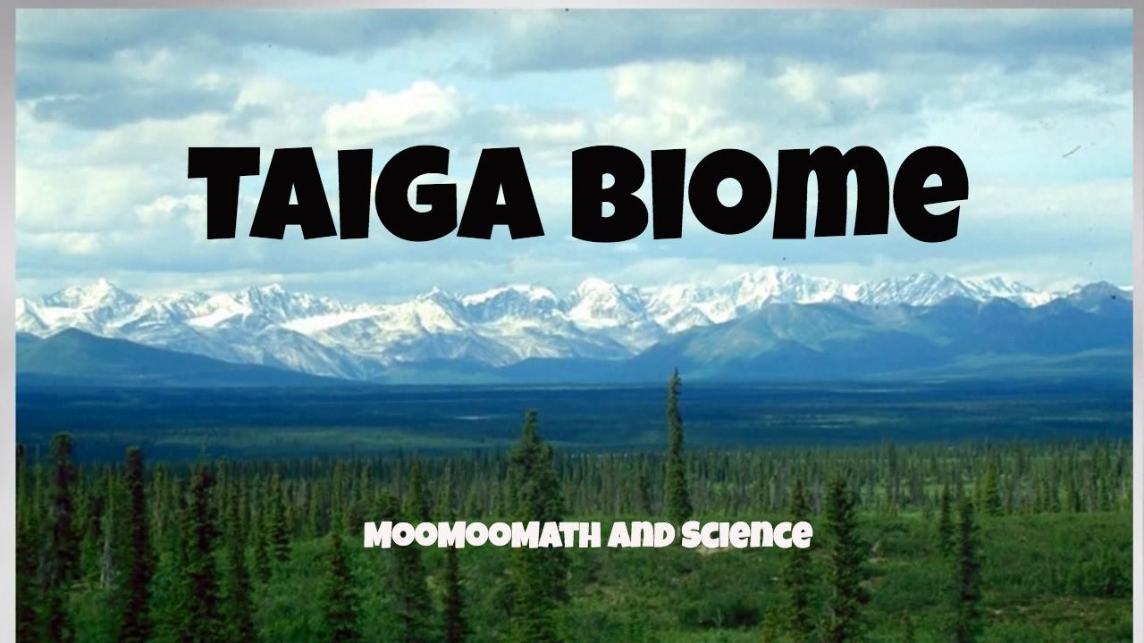Taiga Biome Facts - YouTube