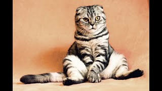Funny Cat Series Collection 45