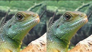 4k Animal VR video (3D)