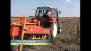 Vadjenje krompira - kako do prinosa od 69 t/h