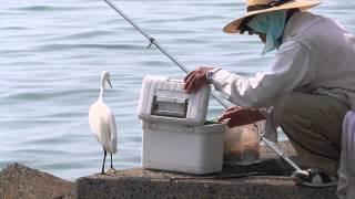 釣り人とシラサギ