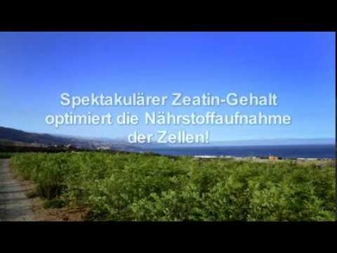 Moringa oleifera aus dem MoringaGarden Teneriffa. Infofilm
